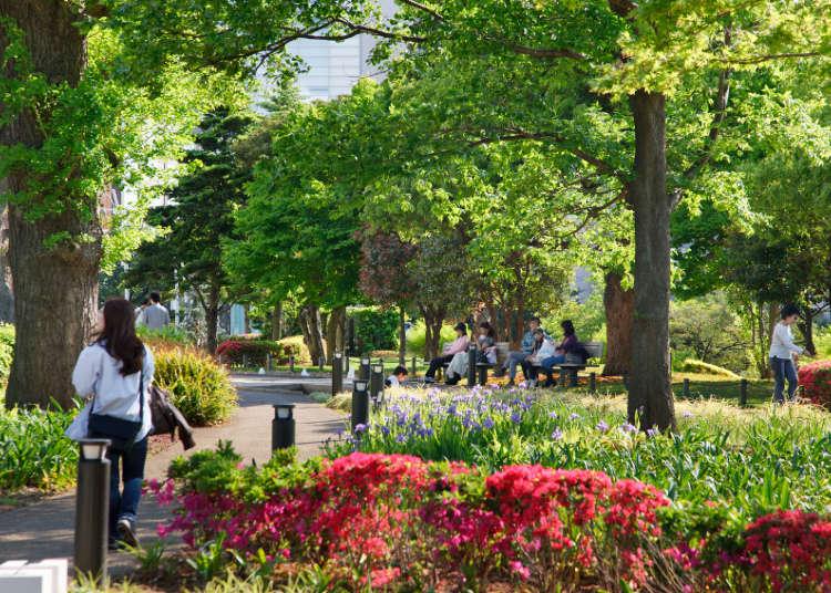枝叶扶苏、绿地宽敞的休憩场所