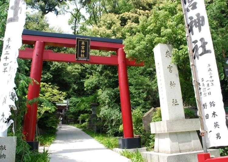 Power spot Atami! Rute jalan-jalan sekitar kuil Kinomiya.