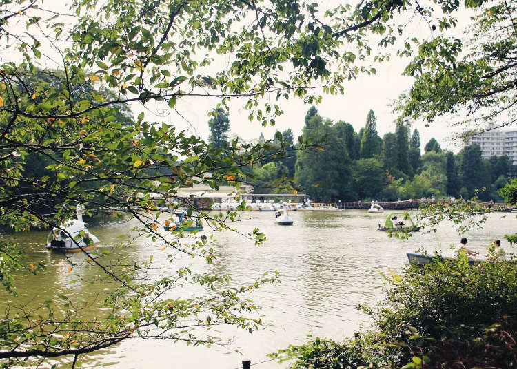 Musashino University & LIVE JAPAN Collaboration - Three Must-See Spots around Kichijoji