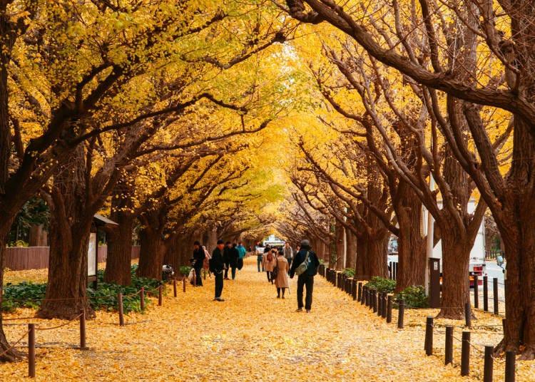 1. Meiji Shrine Outer Garden Ginkgo Festival (Mid-Nov to Early Dec) (Canceled in 2020)