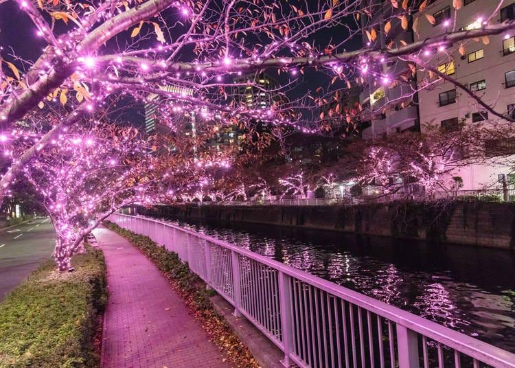 5. Meguro River Minna Illumination 2019 (Nov 8 - Jan 5, 2020)