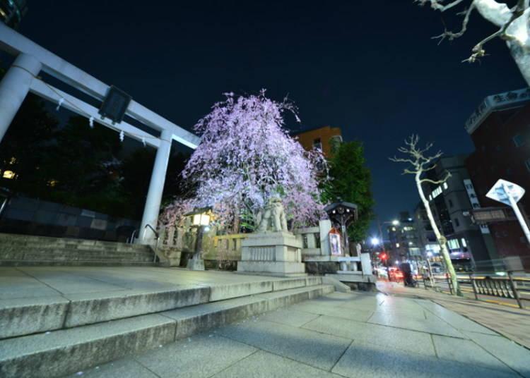 Weddings and Refuge: Nogi Shrine Today