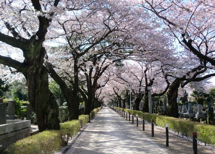 A Visit to the Aoyama Cemetery