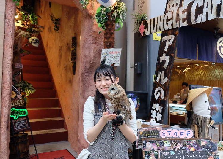 """ตามหา """"นกฮูก"""" สุดน่ารักที่อาซากุสะกัน! ใครเบื่อเที่ยวแบบเดิมๆ ต้องอ่าน!"""
