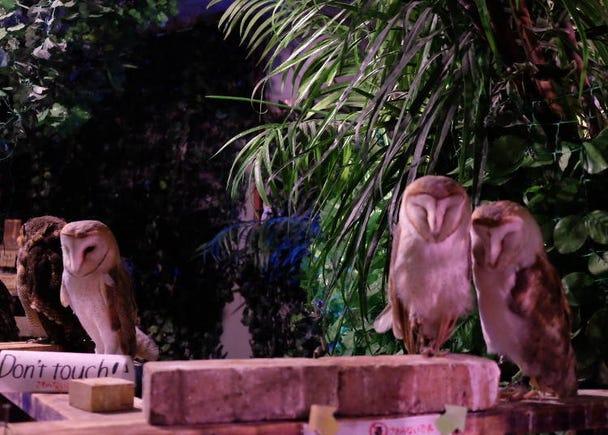 Menyelurusi Owl Forest