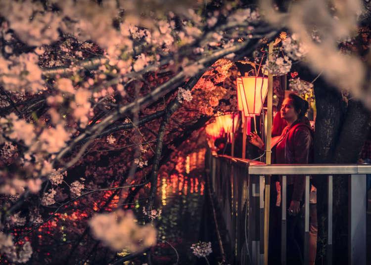 All About Hanami: How Japanese Enjoy Sakura Viewing
