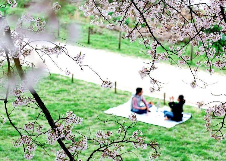 How to Hanami: Appreciation of Sakura Bloom