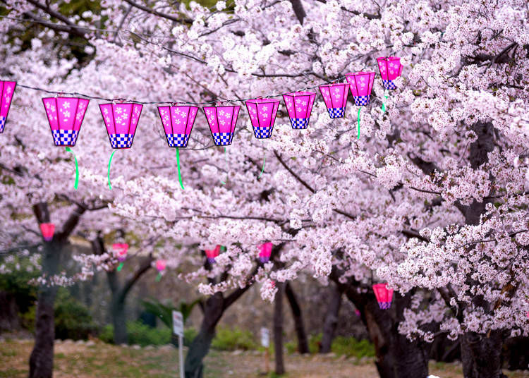 Helpful Tips for a Perfect Hanami Party