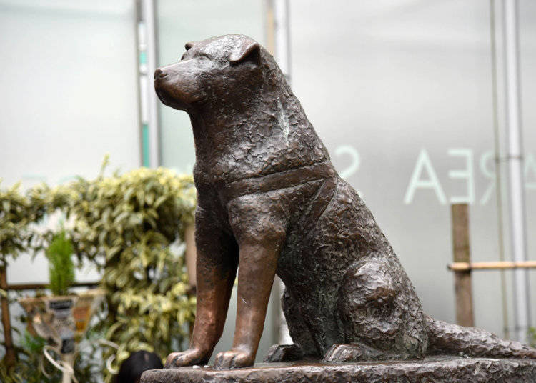 The Legacy of Hachiko Continues