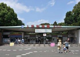 上野動物園の楽しみ方ガイド