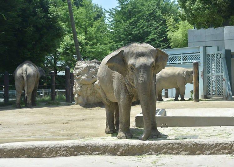East Area: Big Animals Mean Big Smiles!