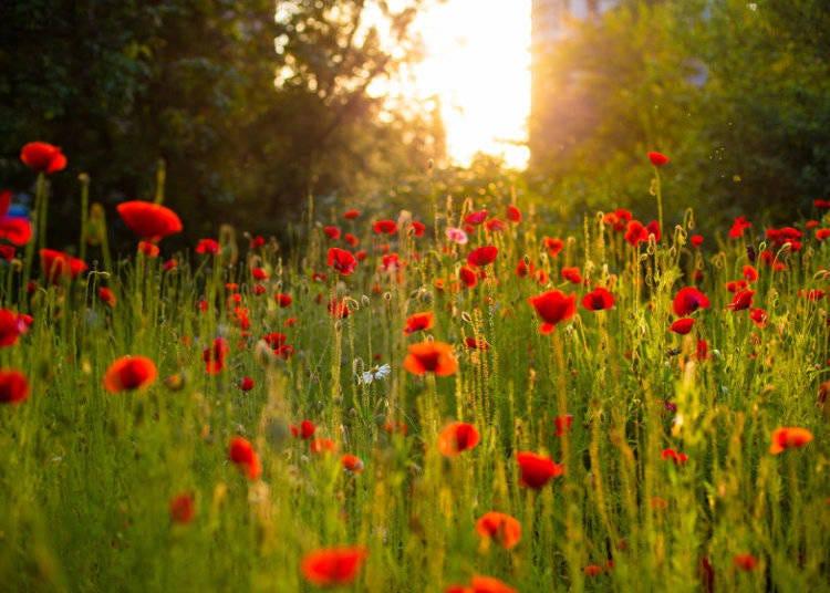野草から生け花へ