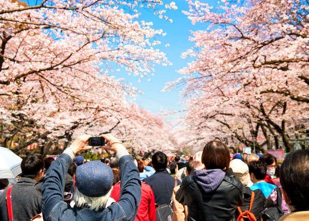 无须在意拥挤的人潮也能悠然赏花――鲜为人知的赏樱好去处