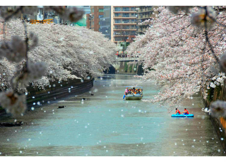 Relax Right Over the Water at Meguro River's Famous Cherry Blossom Scenery