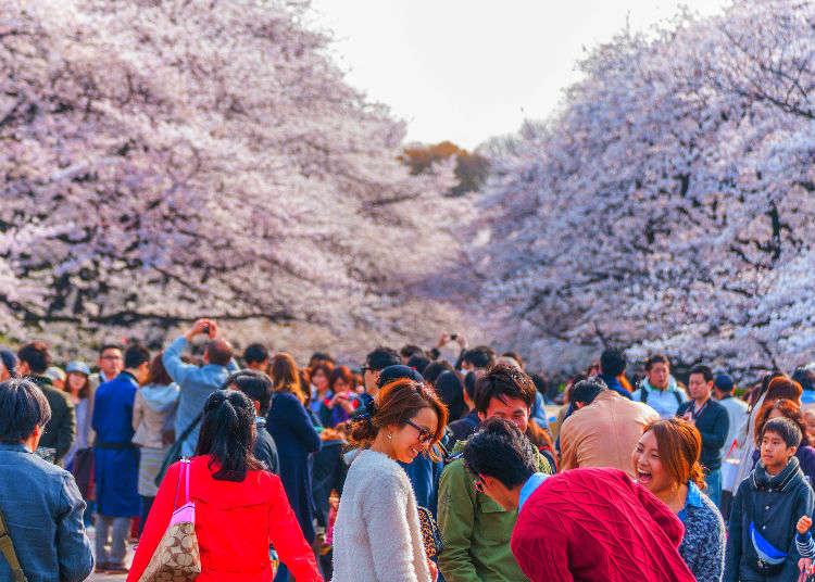 Japan In Spring Tips For Enjoying Cherry Blossom Festivals In Japan Live Japan Travel Guide