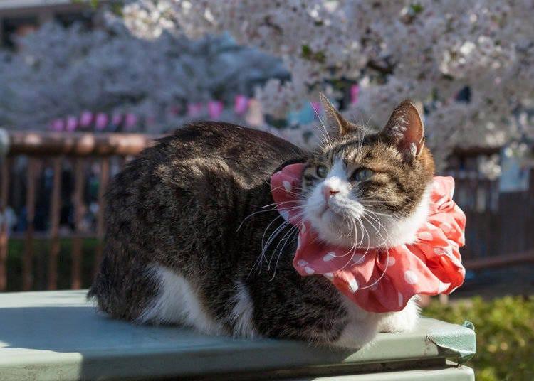来享受日本的赏樱活动吧!