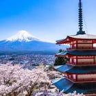Mt Fuji Cherry Blossom Sightseeing Highlights Tour