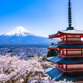 Mt Fuji Cherry Blossom Sightseeing Highlights Tour