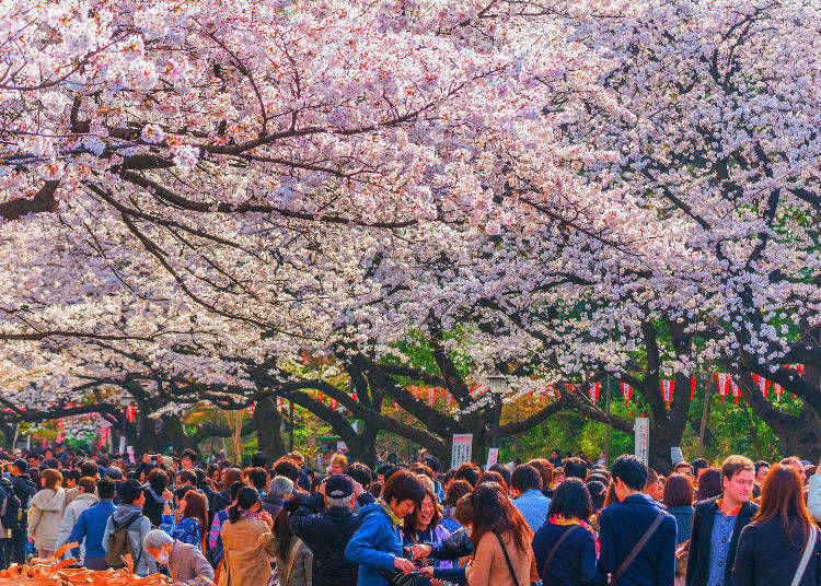 Can I join hanami events in Japan?