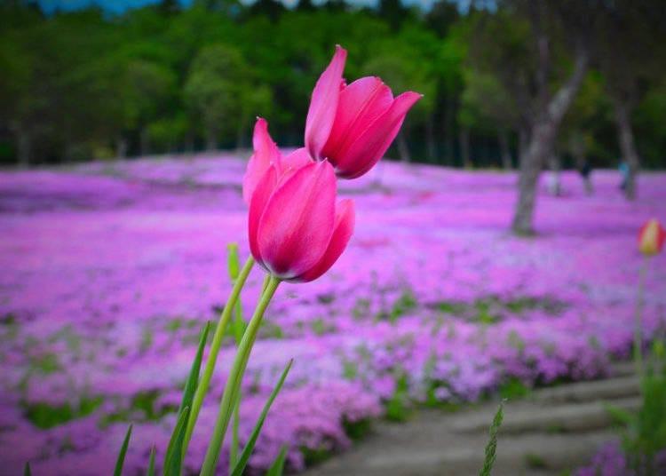 6. The Flower Festivals!