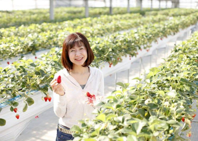 8. Strawberry Picking