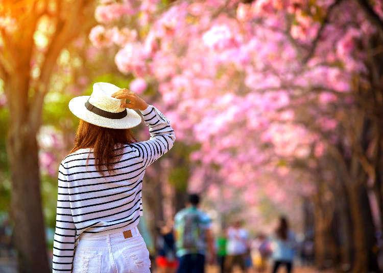 春の気温&天気とおすすめの服装は? 花見や観光前にチェックしておこう!