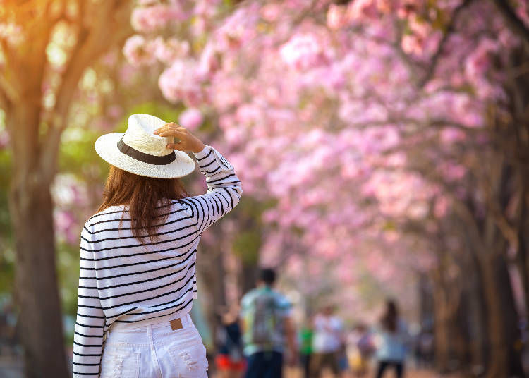 Spring in Japan: Tokyo's Temperatures from March to May