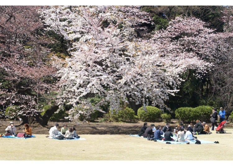 """说到春天,当然要去""""赏樱""""了!"""