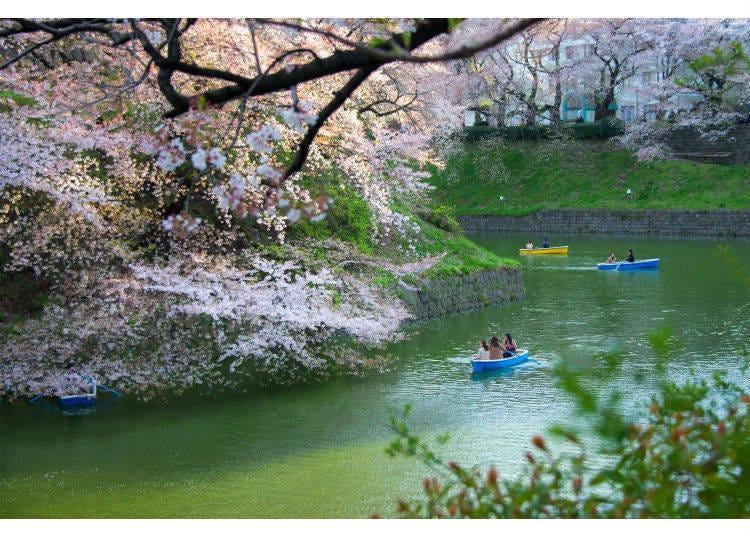 到東京度過美好的春季吧!