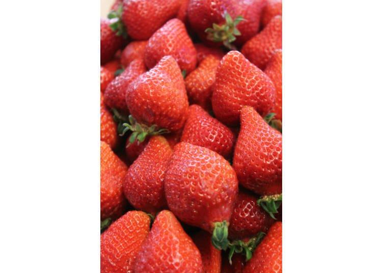 일본 딸기의 종류들