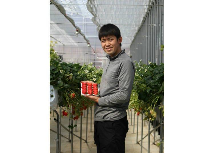 도쿄내에서도 딸기를 재배하는 곳이 있다!
