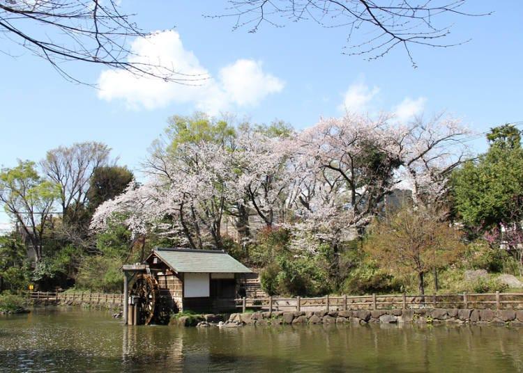 渋谷とは思えないのどかな雰囲気の公園