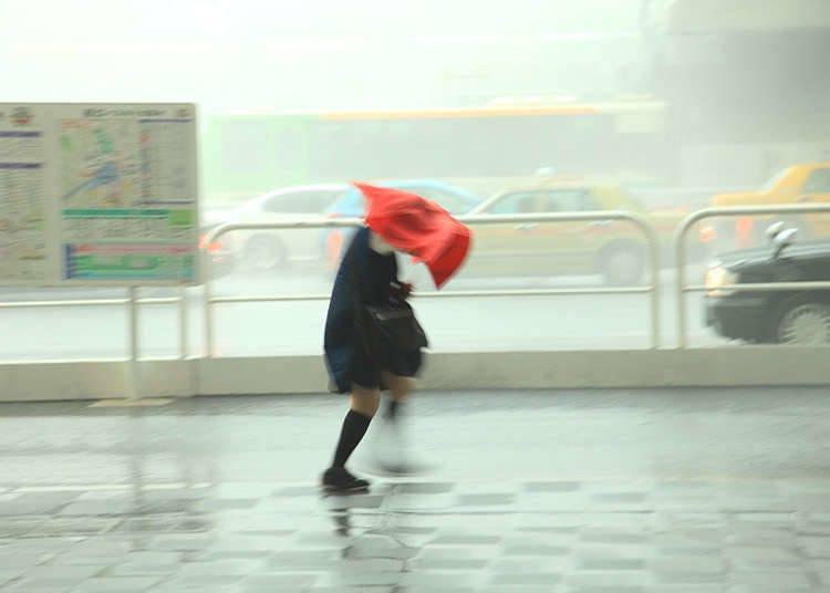 일본의 태풍발생 시기는?