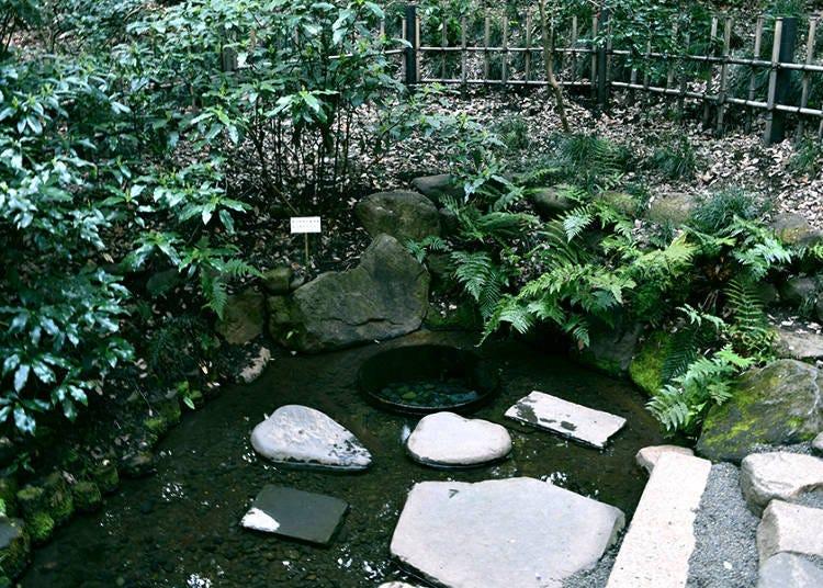 More than Prayer: Meiji Shrine, the Sightseeing Highlight