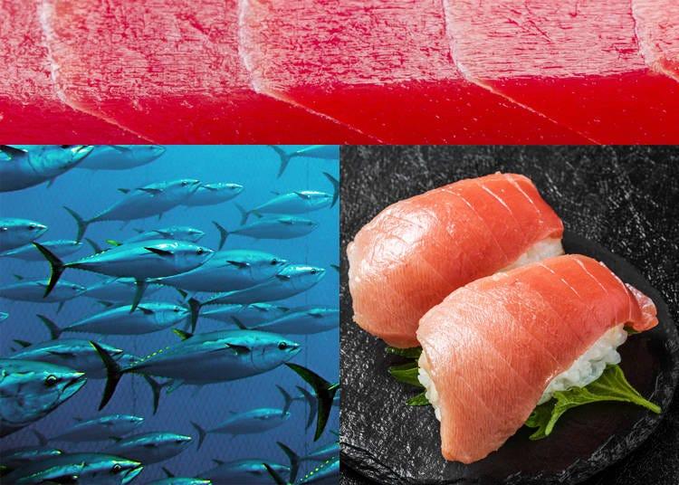 4) Maguro – Bluefin Tuna