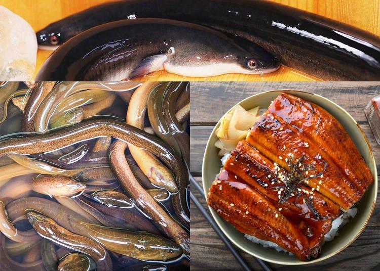 1) Unagi – Japanese Freshwater Eel
