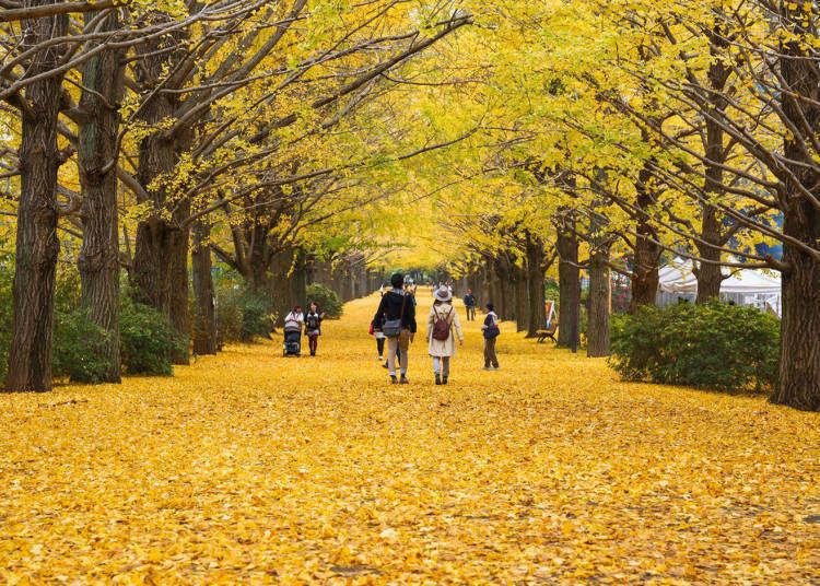 日本东京9月‧10月‧11月秋季天气、服装及必备小物