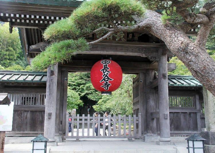 必看!四季能看見不同花朵盛開的花之寺院「長谷寺」