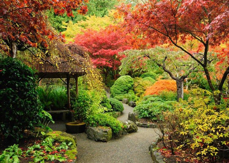 日文的「紅葉」不是只有紅色的?