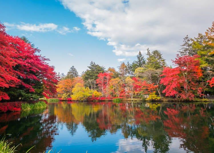 日本賞楓⑤北陸地區、中部地區