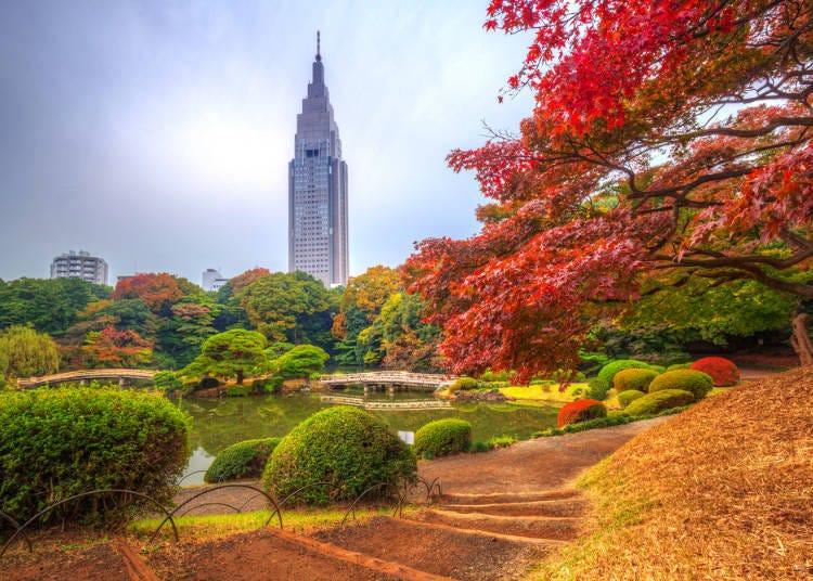 在日式氛围中绽放的枫红 寺庙‧日式庭园中的红叶景点