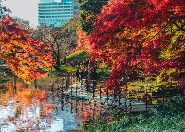 東京紅葉景點①以赤紅色為主的紅葉景點