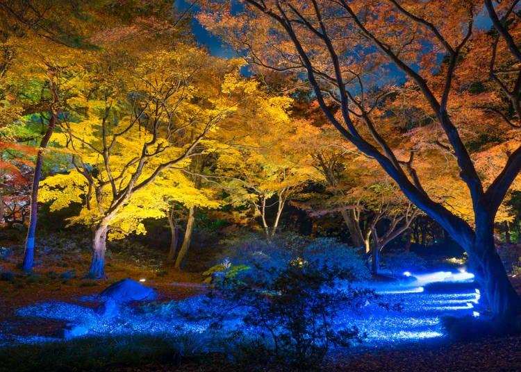 東京紅葉景點③氣氛唯美、能欣賞夜楓的紅葉景點
