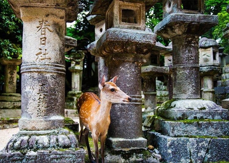 6. Nara