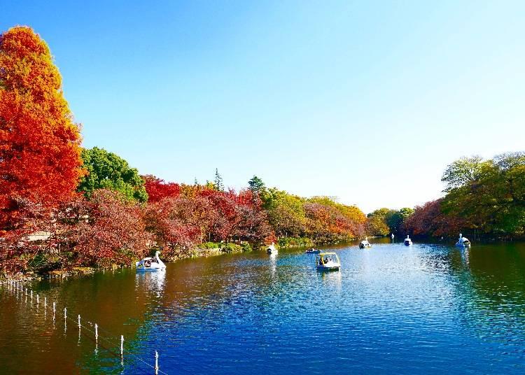第5站 井之頭恩賜公園  賞櫻、賞楓一年四季都有值得佇足的美景