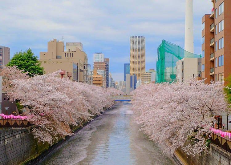 東京第一高人氣的賞櫻名所 浪漫唯美的目黑川櫻花並木道