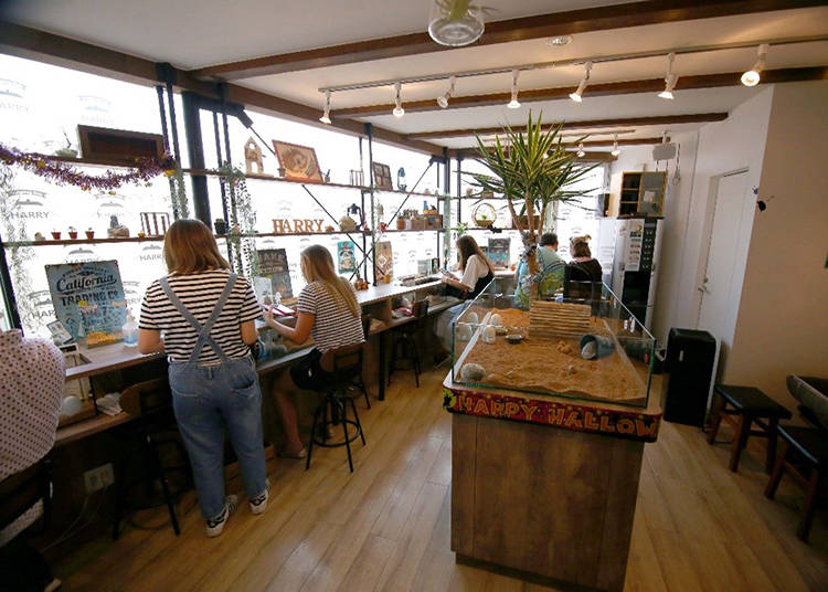 Hedgehog Café Services