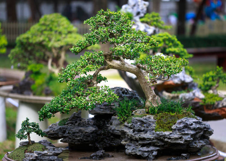 The Long History of Bonsai in Japan
