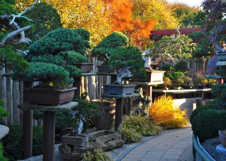 Seeing Bonsai in Japan: Places to Enjoy Bonsai Trees