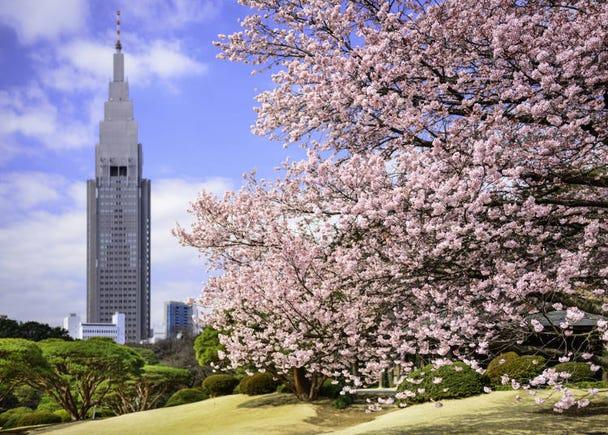 春櫻秋楓正美麗 東京賞花趣